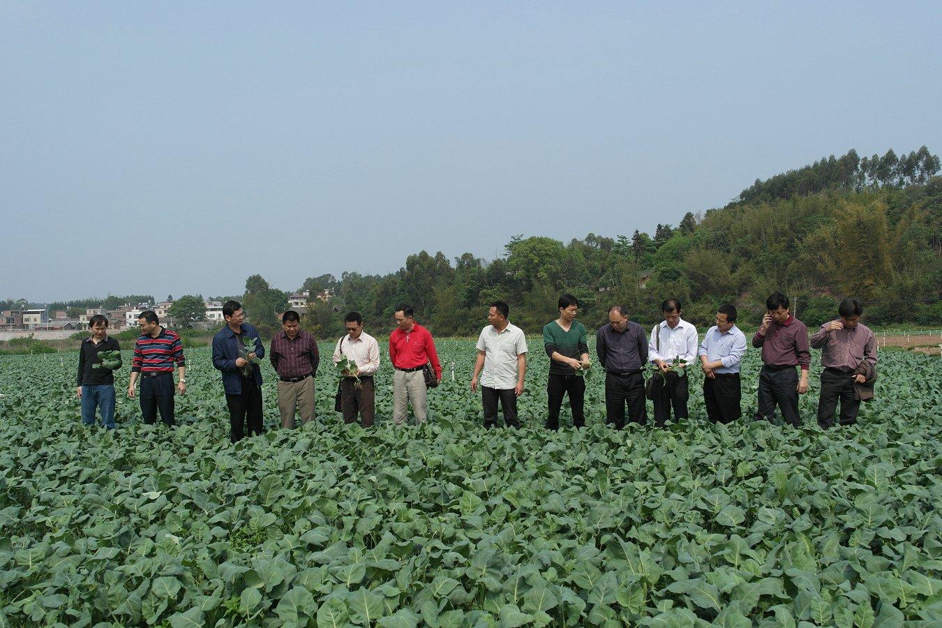2013年3月21日参观河源市东源县灯塔镇蔬菜种植基地